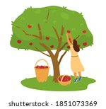 Woman Farmer Collecting Apples...