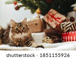 Adorable Tabby Cat Sitting At...
