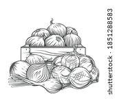 onion  leek outline hand drawn... | Shutterstock .eps vector #1851288583