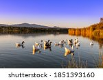 Family Of Geese In The Water O...