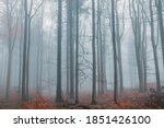 fog in forest   autumn mystery... | Shutterstock . vector #1851426100