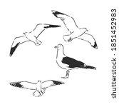 Seagulls Set Hand Drawn Vector...