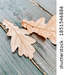 Small photo of Autum leaves photo