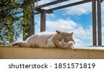 Feral Cat Sleeping In The...