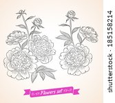 vector flowers set. collection... | Shutterstock .eps vector #185158214