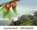 tree branch with cacao fruits... | Shutterstock . vector #185166638