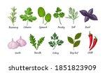 culinary herbs set. natural...   Shutterstock .eps vector #1851823909