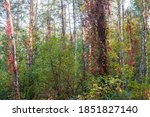 Section Of The Forest With...