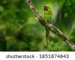 Costa Rica Wildlife. Ara...