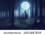 Big Deer With Moon Stands In A...