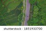 Sumedang Rice Field And Road