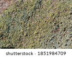 Lichen Growing On A Rock In The ...