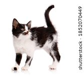 Black And White Kitten With A...
