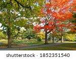 Fall Foliage At Elm Park In...