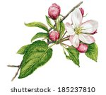 watercolor with apple tree in... | Shutterstock . vector #185237810