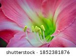 Close Up Photo Of A Bright And...