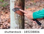 rubber workers were chronicled... | Shutterstock . vector #185238806