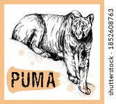 Hand Drawn Sketch Style Puma...