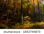 Autumn Forest Scenery With Roa...