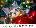 Christmas Cat. Portrait Striped ...