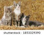 Three Cute Small Cats In A Barn ...