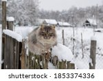 Small photo of First snow. The cat sits on the fence in winter. The village cat sits in the snow on the fence. Snowing. A hungry cat is waiting for its owner in the country. Abandoned cat in a country house