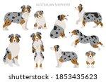 Australian Shepherd Dogs Set....