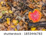 Top View Of A Red Mushroom...