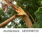 A Tree Branch That Broke Off...