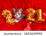 Christmas Cat 2021. Kitty With...