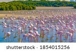 Colorful Flock Of Pink...