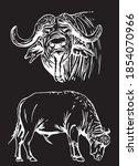 vector set of bulls isolated on ... | Shutterstock .eps vector #1854070966
