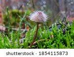 Amazing Mushroom   Little...
