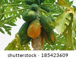 Papaya Tree In The Orchard Of...