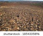 View Of Burnt Down Grassland...
