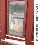 Chickens Looking Out The Window ...