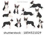 Boston Terrier Clipart....