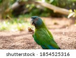 Blue And Green Macaws Eating In ...