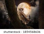 Owl On Tree In Misty Forest...