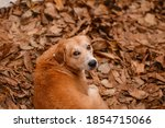 Abandoned Dogs In The Autumn...