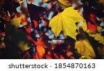 Autumn. Beautiful Colorful...
