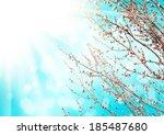 apricot tree flower against ... | Shutterstock . vector #185487680