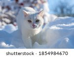 Cat In The Snow. The Cat Froze...
