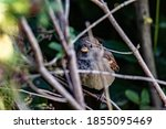 A Curious Little Chubby Sparrow