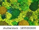 Multicolored Stabilized Moss...