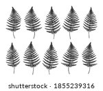 fern leaves set   vector fern... | Shutterstock .eps vector #1855239316