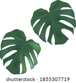 vector tropical palm leaves.... | Shutterstock .eps vector #1855307719