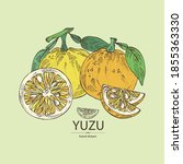 background with yuzu  fruts ... | Shutterstock .eps vector #1855363330