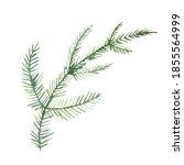 Watercolor Spruce Branch...