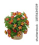 Red And Yellow Petunias Bouquet ...